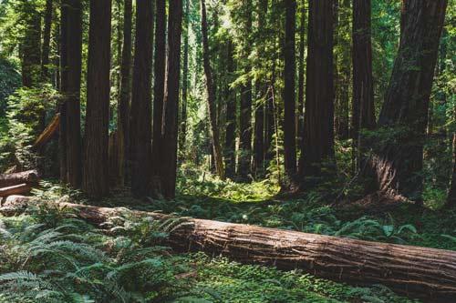 茂密的森林